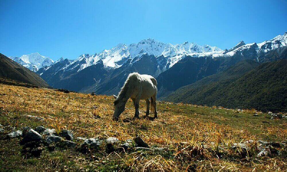 11 days Langtang Valley Trek